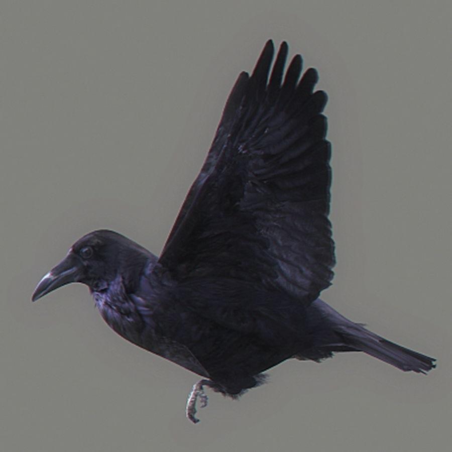مدل سه بعدی و انیمیشن کلاغ Animated Crow - مغزابزار